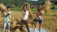 Private Tour: 2-Day Authentic Hill Tribes Tour and Homestay from Chiang Mai