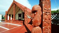Shore Excursion: Rotorua City Hop-On Hop-Off Tour from Tauranga, Tauranga Tours and Sightseeing