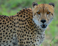 3-Day Quick Tour of Kruger National Park from Skukuza Airport Private Car Transfers