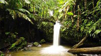 El Yunque Rainforest Hiking Adventure