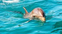Nature Discovery Tour: Wild Dolphins, Giant Tortoises, Crocodiles and The Wild South From Port Louis