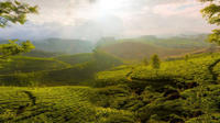 3 jours Visite privée du Tea Valley et de la station Munnar Hill, de Kochi - Kochi -