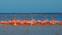 Private Tour: Ek Balam, Pink Flamingos Sanctuary and Tequila Tasting Factory from Cancun