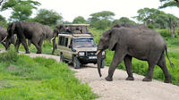Full-Day Safari to Tarangire National Park from Arusha