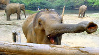 1 Day Ethical Choice Tour to the Elephant Nature Park with Private Transportation and English-Speaking Guide Private Car Transfers