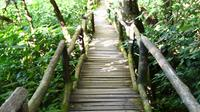 Private 8-Hour Tour of Doi Inthanon National Park including Lunch from Chiang Mai Private Car Transfers