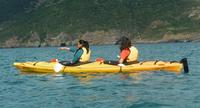 Shore Excursion: Scenic Cruiser Sea Kayaking Safaris in Akaroa, Akaroa Tours and Sightseeing