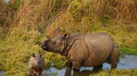 3-Night Wildlife Adventure Tour from Kathmandu