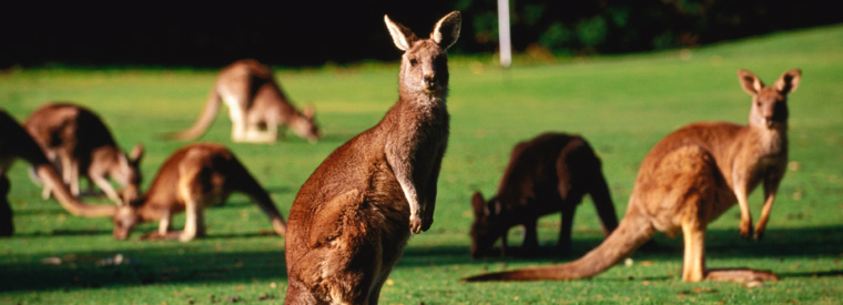 Australia Walking & Biking Tours