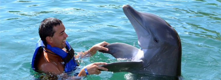 Dominican Republic Swim with Dolphins