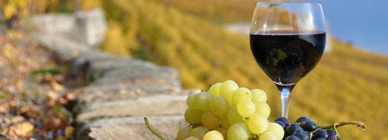 Florence Wine Tasting & Winery Tours