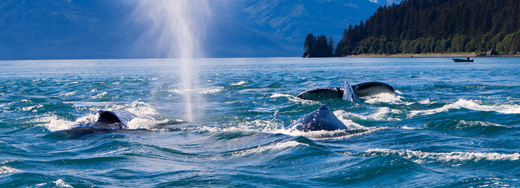 Juneau Cruises, Sailing & Water Tours
