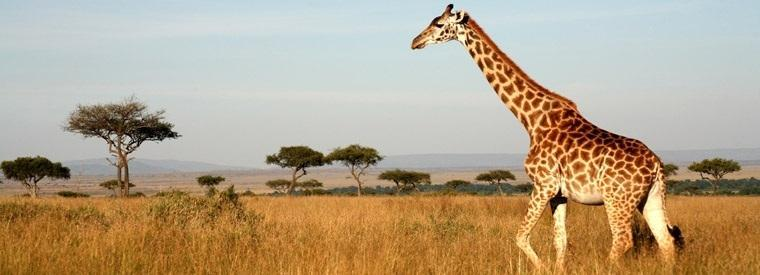 Nairobi Walking & Biking Tours