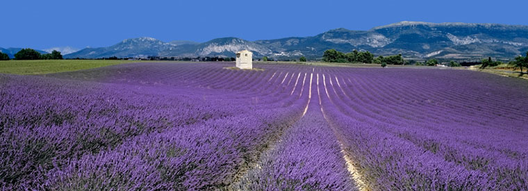 Magical Journeys to Provence