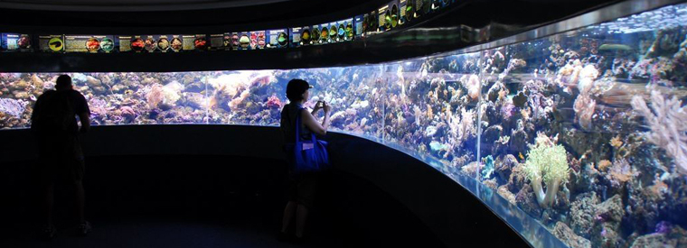 Sydney Museum Tickets & Passes