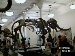 Photo of New York City American Museum of Natural History 2