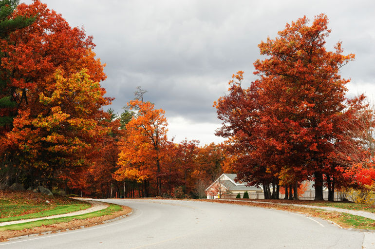 Fall foliage, Massachusetts - Boston