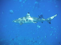 Photo of Bora Bora Full-Day Bora Bora Lagoon Cruise Including Snorkeling with Sharks and Stingrays First Stop!