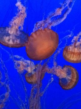 Monterey Aquarium.... , kimme39 - December 2011