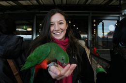 Photo of   Playing with the wild parrots!