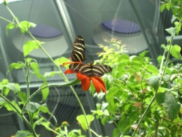 Photo of San Francisco California Academy of Sciences NightLife Pretty Butterflies