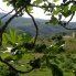 Photo of Florence Chianti Region Wine Tasting Half-Day Trip from Florence The view - Chianti Region