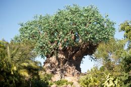 "Photo of Orlando Disney's 10-Day Magic Your Way Ticket Tree from ""Tough to Be a Bug"""