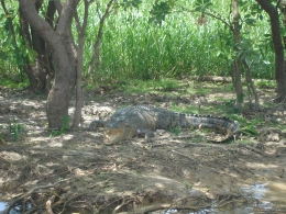 Photo of Darwin Kakadu, Nourlangie and Yellow Waters Tour with Optional Return Flight to Darwin Croc at Yellow Water