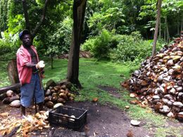 This is the guy that de-shells all the coconuts at the plantation. The pile to the right is discarded shells. , Ryan P - September 2012