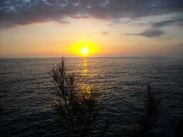 Photo of Montego Bay Negril Sightseeing Tour with Sunset at Rick's Cafe Negril