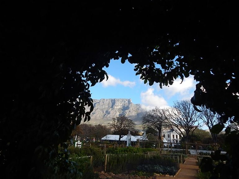 Table Mountain from Cape Gardens