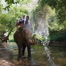 Photo of Bangkok Khao Yai National Park and Elephant Ride Day Trip from Bangkok Time for a shower
