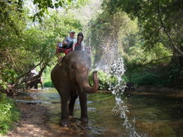 One American tourist, one Japanese tourist, one Thai elephant, one memorable ride. , Alan R - February 2012