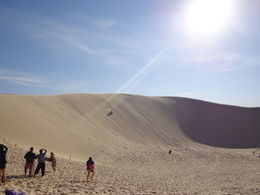 Photo of Sydney Port Stephens Day Trip with Dolphin Watching, Sandboarding and Australian Wildlife Beautiful sand dunes
