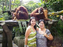 Photo of Singapore Singapore Zoo Breakfast with Orangutans My mom, my relatives and I hehe