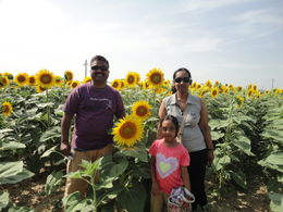Photo of Florence Tuscany in One Day Sightseeing Tour Sunflower family