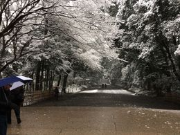 Photo of Tokyo Scholar-Led Architectural Walking Tour: Harajuku, Omotesando and Roppongi The walkway to Meiji Shrine in the snow