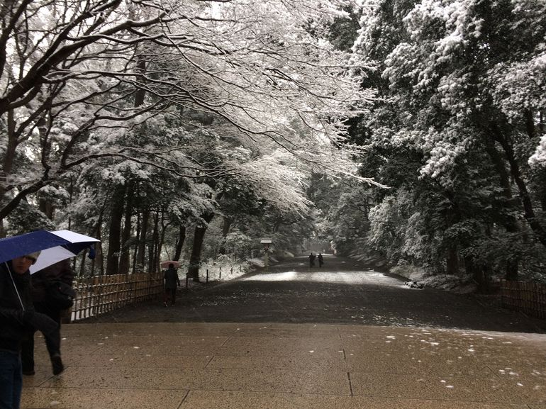 The walkway to Meiji Shrine in the snow - Tokyo