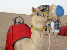 Photo of Dubai Dubai Super Saver: City Sightseeing Tour and Desert Safari Camel Ride in the desert!