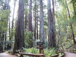 Photo of San Francisco Muir Woods, Giant Redwoods and Sausalito Half-Day Trip Muir Woods by RG