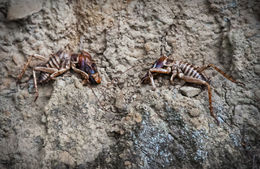 These are the insects whose Maori name means and quot;gods of all things ugly, and quot; after which the Weta studios are named. We found them in a crevice just over the spot where Frodo and his ... , Gordon S - February 2015
