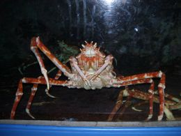 This crab looked like something from outer space. Couldn't resist taking a photo. - September 2008