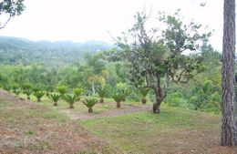 Photo of   Croydon Plantation