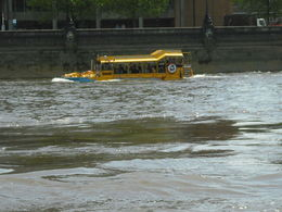 Photo of   Duck on the Thames