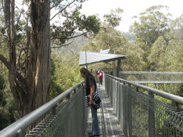 Photo of Hobart Huon Valley and Tahune Forest Airwalk Tour from Hobart Elizabeth peers over the edge, Tahune Airwalk
