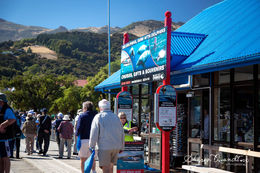 Photo of Christchurch Akaroa Harbour Nature Cruise Booking Office for Tour