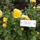Photo of Victoria Butchart Gardens Tour from Victoria Julia Child Rose, Butchart Gardens