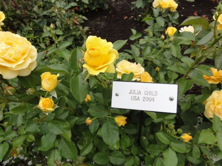 The Julia Child Rose - one of hundreds of roses at Butchart Gardens