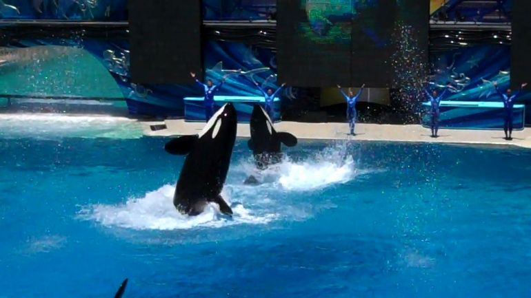 Sea World - San Diego