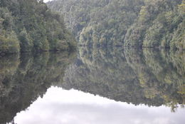 Photo of Tasmania Gordon River Cruise from Strahan untouched wilderness